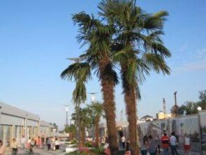Пальмы в Аркадии