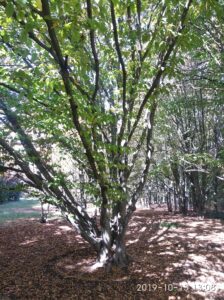 Заповедник АСКАНИЯ-НОВА роща ведьминых деревьев