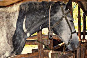 Конь - Зелёные хутора таврии