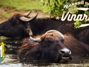 Водяные буйволы, дегустация вин и экскурсия по Измаилу.