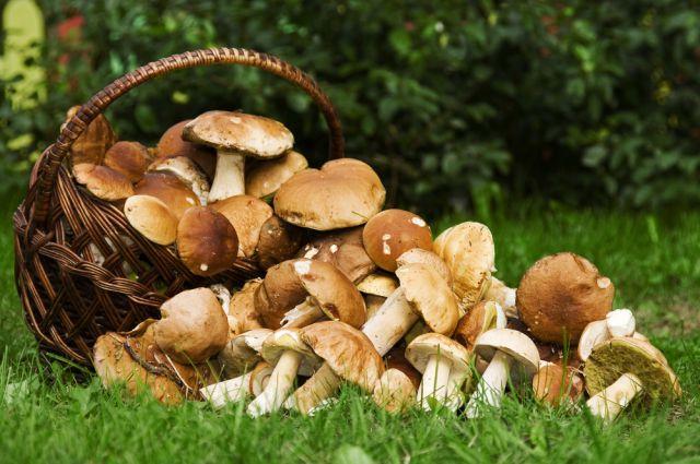 сбор грибов под Одессой