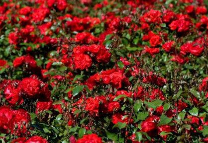 Долина роз и Парки Доброслава