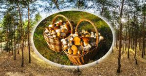 за грибами из одессы в Цурюпинский лес