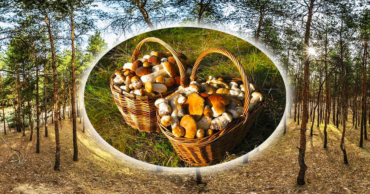 В Цурюпинский лес за грибами