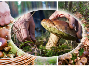 За грибами в Савранский лес