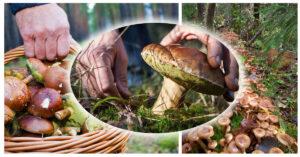 тур за грибами из Одессы